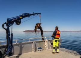 Høyring Alden hamneområde: Lokal forskrift vedrørande innkrevjing av farvassavgift